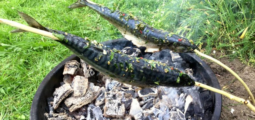 Steckerlfisch: Marinert makrell på grillen