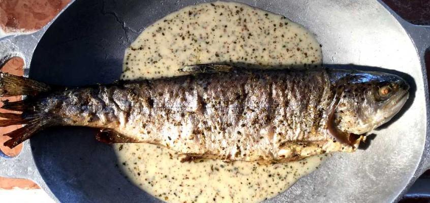 Truite sauce marjolaine: Ørret i fransk meriansaus